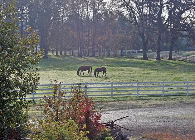 Crown Meadow Equestrian Center A High Quality Horse