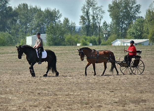 Crown Meadow Equestrian Center: A High Quality Horse Boarding Facility