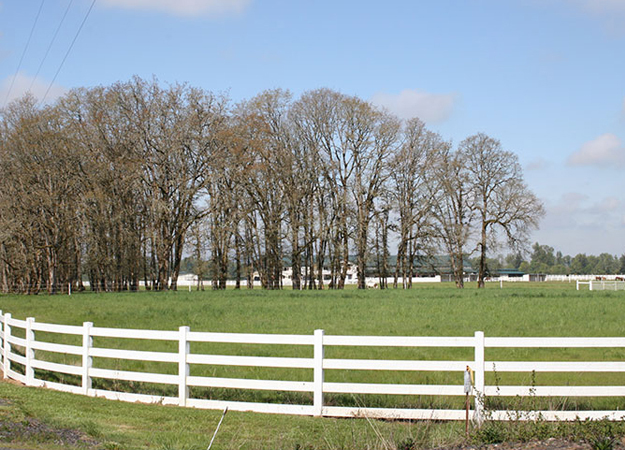 Horse Images And More From Crown Meadow In Scio Oregon